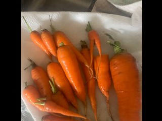 PV Harvest