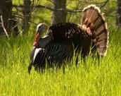 Turkey Trot Open House at Spruce Run
