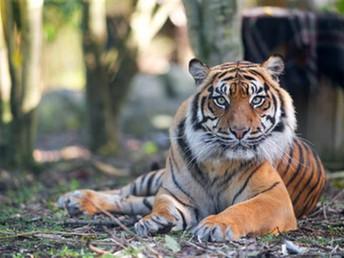 Piwakawaka visit to the Hamilton Zoo