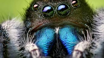 Spider Insiders