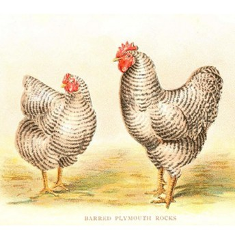 Chicken Coop group work meeting
