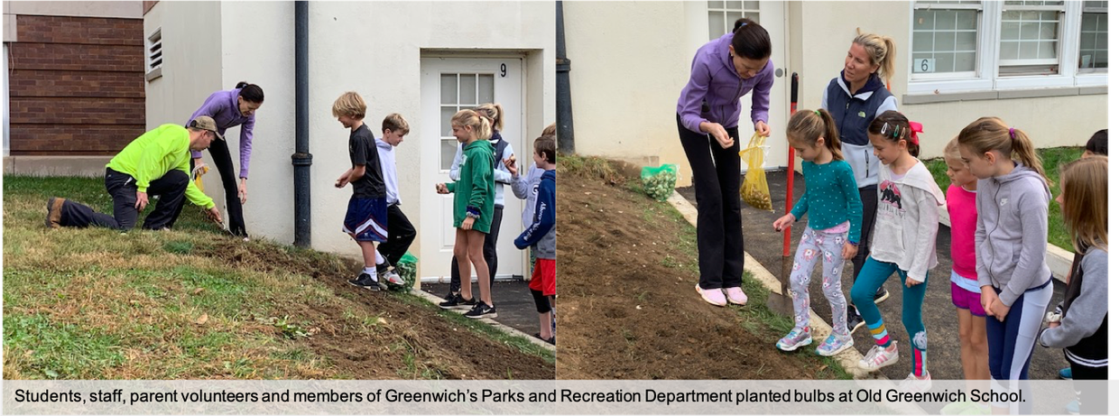 Old Greenwich School students, staff and parent volunteers plant bulbs outside of the school