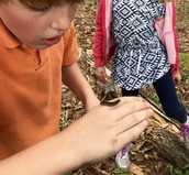 Discovering caterpillars