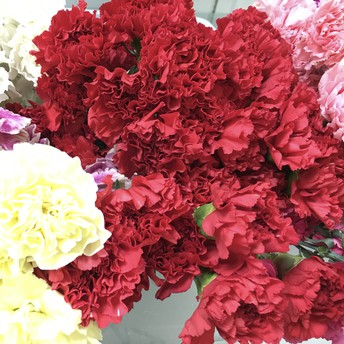Carnation Sales - A Barry Tradition