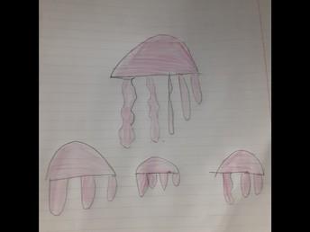 Hector's Jellyfish