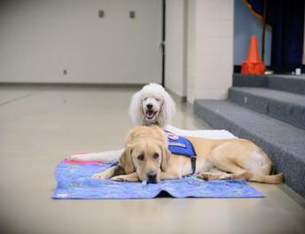 Goldie and Bentley