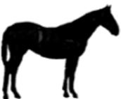 Equine Webinar Series
