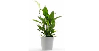 Understanding The Background Of Funeral Plants