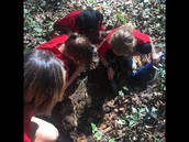Decomposers dig