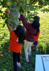 Field Trip to Stribling Orchard