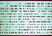 Tarjetas perforadas, década de 1960