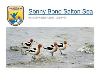 Sonny Bono Salton Sea National Wildlife Refuge