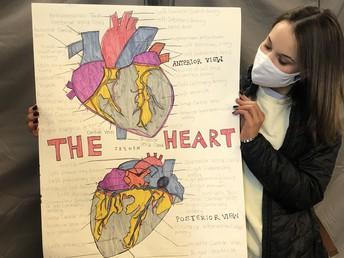 Human Hearts - Medical 1