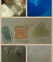 Aquatics Studies Work