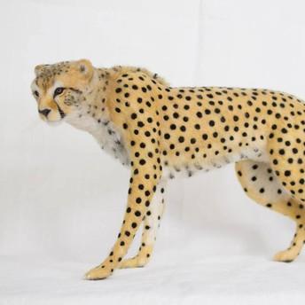 cheetah 3day  class