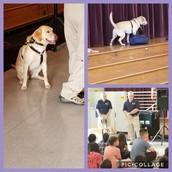 6th gr Canine Drug Dog Assembly