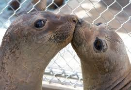 Nov. 22nd:  MS/HS Pacific Marine Mammal Rescue Event