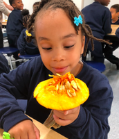 How many seeds do you think are in this pumpkin?