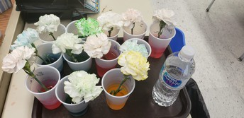 Kindergarten Science Experiment Still underway