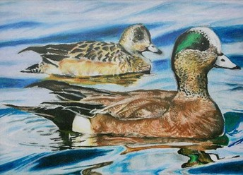 Junior Duck Stamp - Statewide Wildlife Art Challenge