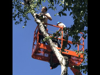 Trustees trimming trees