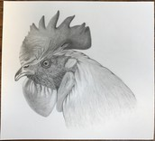 Graphite Rooster