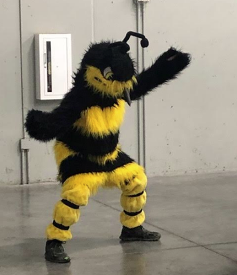 Our Hornet!