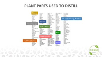 What part is distilled?