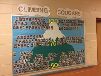 Climbing Cougars