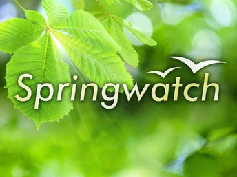 Year Four - Spring Watch
