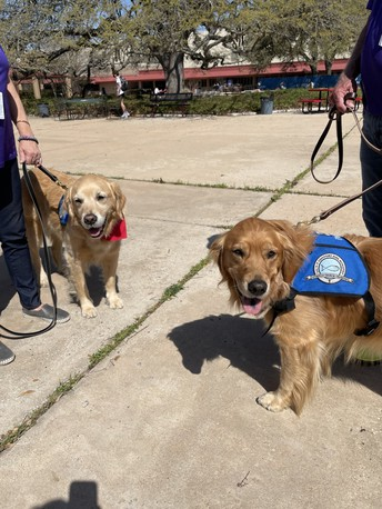 Comfort Dogs are BACK!