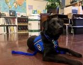 Britt - Program Assistance Dog