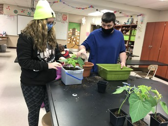 Lots of repotting to help the plants grow.