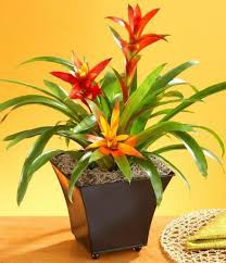 The Rank Of  Indoor House Plants In Consumer's Market