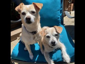 Tino and Roo say hello!