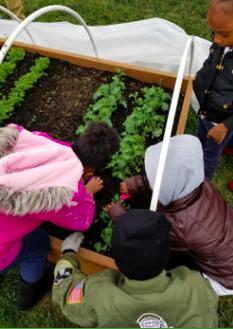 Devonshire Junior Master Gardeners