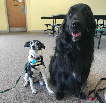 Therapy Dogs!
