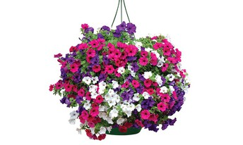 Beautiful flower baskets for sale