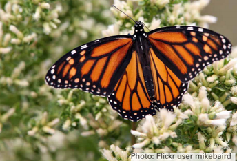 Tenth Annual Monarch Butterfly Day
