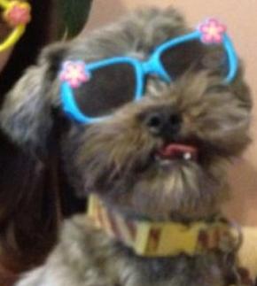 Sra. Hernandez' dog, Jordy!
