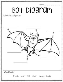 Print Bat Diagram here
