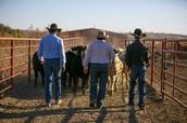 Livestock Judging Camp Schedule
