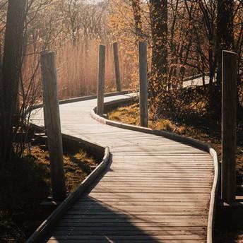 Bridge walkway in woods