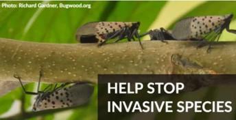Invasive Species Awareness Week: #NYInvasiveAwareness