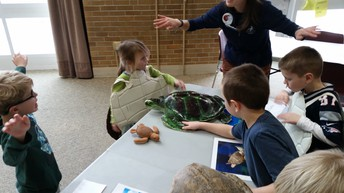 Audubon lesson on Turtles with Kindergarten...  How do they swim?