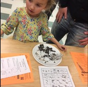 Dissecting Owl Pellets