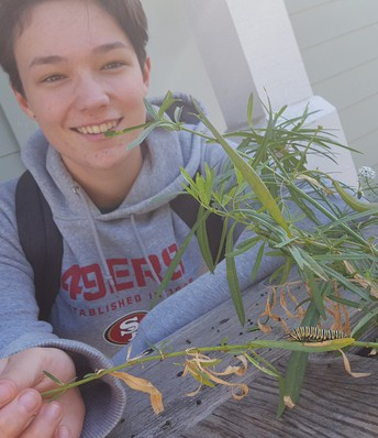 Cece Illingworth with VOS Monarch Caterpillars!