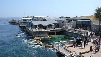 Monteray Bay Aquarium Live Web Cams