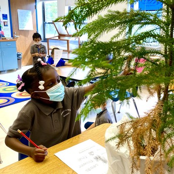 A student touches a pine tree branch
