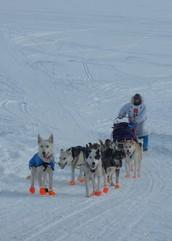 Karen Land, Iditarod Musher, to Visit Argos Elementary